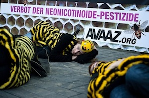 "bee ""die in"" in Cologne"