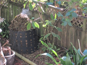 Compost Steaming