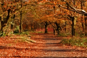 An_Autumn_Walk_by_wandereringsoul