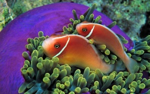 tropical-fish_149347-1440x900