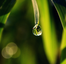 ____drop_____by_matthewpoland-d48egz9