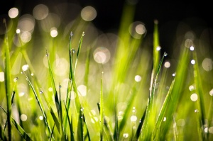dew-on-morning-grass